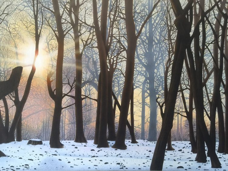 Winter Sunshine in the Woods (by Mark Davison)